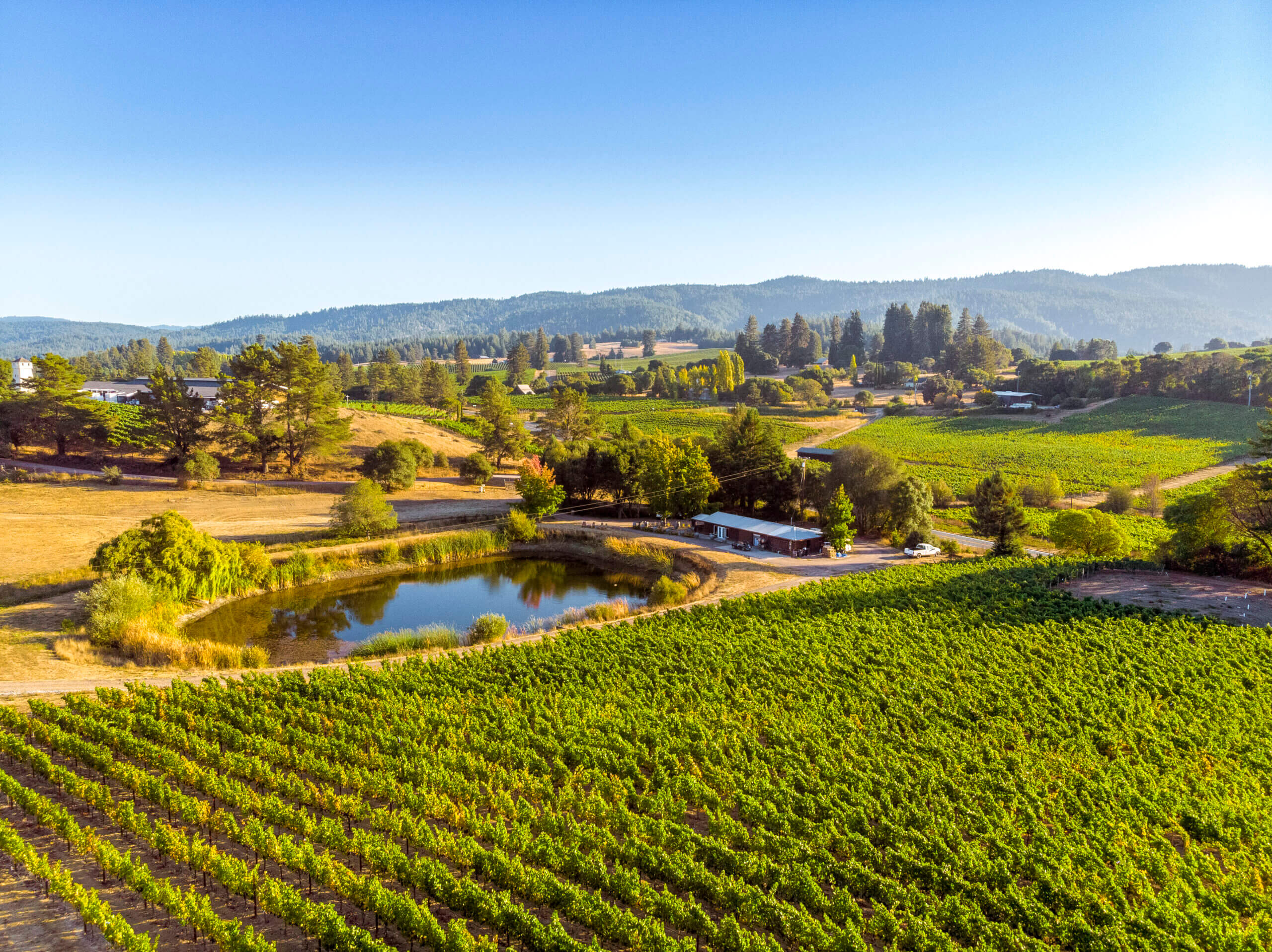Celebrating Anderson Valley Pinot Noir Month